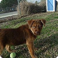 Adopt A Pet :: Violet - Gadsden, AL
