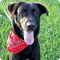 Adopt A Pet :: BLACKIE - Glastonbury, CT
