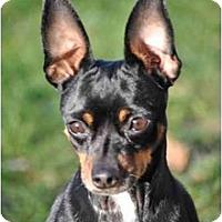 Adopt A Pet :: Bozworth - Minneapolis, MN