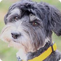 Adopt A Pet :: Dulce - Norwalk, CT