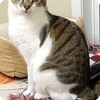 Adopt A Pet :: Bugg - Monroe, GA