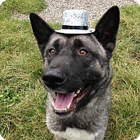 Adopt A Pet :: Thor - Rochester/Buffalo, NY