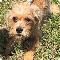 Adopt A Pet :: Cassie - Wyanet, IL