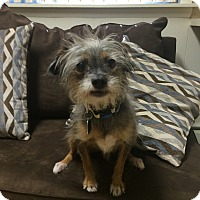 Adopt A Pet :: Ewok IN CT - Manchester, CT