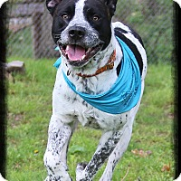 Adopt A Pet :: Cooper - Shippenville, PA