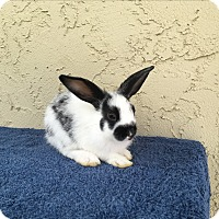 Adopt A Pet :: Daisy - Bonita, CA