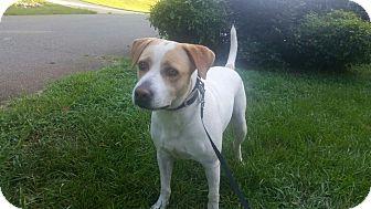 Labrador Retriever Mix Dog for adoption in Richmond, Virginia - Jasper
