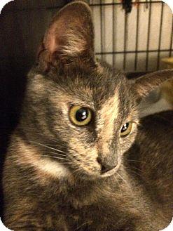 Calico Cat for adoption in Savannah, Georgia - Gabby