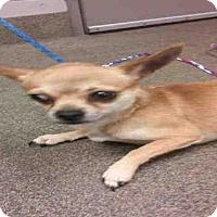 Adopt A Pet :: MIGUEL - Jacksonville, FL