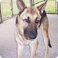 Adopt A Pet :: M Lanie - Lafayette, LA