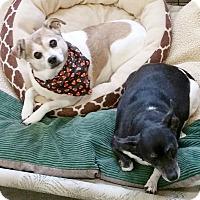 Adopt A Pet :: Cutie - Urbana, OH