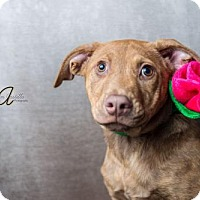 Adopt A Pet :: Ariel - Miramar, FL