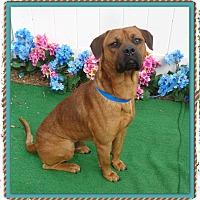 Adopt A Pet :: GILBERT - Marietta, GA