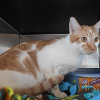 Adopt A Pet :: wicked - haslet, TX