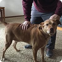 Adopt A Pet :: RJ - Aurora, IL