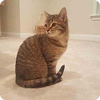 Adopt A Pet :: Loretta - Gaithersburg, MD