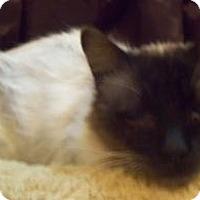 Adopt A Pet :: Browning - Ennis, TX