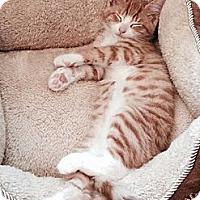 Adopt A Pet :: Jack - Pittstown, NJ