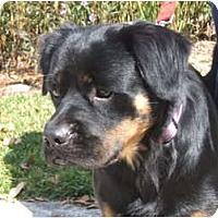 Adopt A Pet :: Weber - Orlando, FL