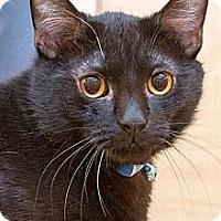 Adopt A Pet :: Jordan - Irvine, CA