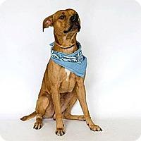 Adopt A Pet :: Monty - Clermont, FL