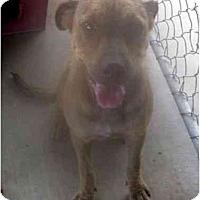 Adopt A Pet :: JoJo - Los Alamitos, CA