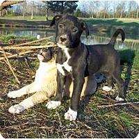 Adopt A Pet :: Sassy Sox (pending) - Adamsville, TN