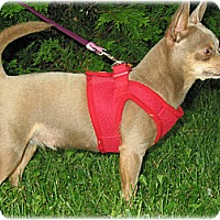Adopt A Pet :: Ashley - Dayton, OH