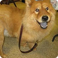 Adopt A Pet :: Wizard - Phoenix, AZ