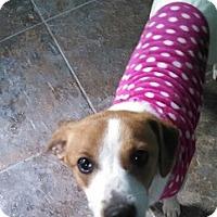 Adopt A Pet :: Kali - Hamilton, ON