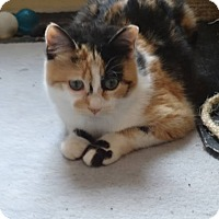 Adopt A Pet :: Haley -Adoption Pending! - Colmar, PA