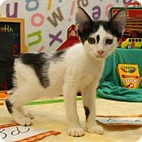 Adopt A Pet :: Clint - Bedford, TX