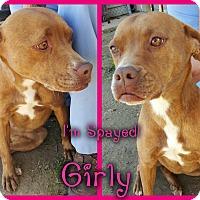 Adopt A Pet :: GIRLY - muskogee, OK