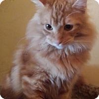 Adopt A Pet :: Merry Brandybuck - Ennis, TX