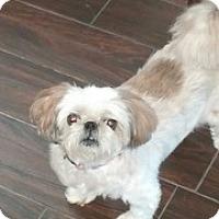 Adopt A Pet :: Chloe - Naples, FL