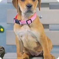 Adopt A Pet :: Ezmay - Carteret/Eatontown, NJ