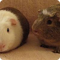 Adopt A Pet :: Spot - Steger, IL