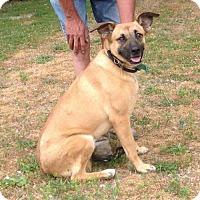 Adopt A Pet :: Tulip - 62 lbs - Texico, IL