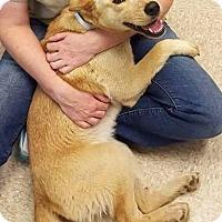 Australian Cattle Dog Mix Dog for adoption in Dallas, Texas - Scarlett