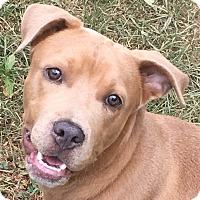 Adopt A Pet :: Tanner - Staunton, VA