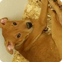 Adopt A Pet :: Mary Jane - Cherry Hill, NJ
