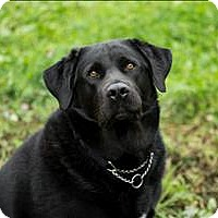Adopt A Pet :: Marsellus - Fort St. John, BC