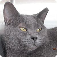 Adopt A Pet :: Daniella - Germantown, MD