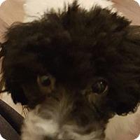 Adopt A Pet :: Stella - Alpharetta, GA