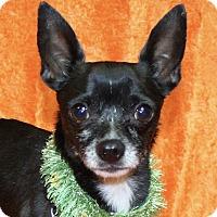 Adopt A Pet :: Chico - Jackson, MI