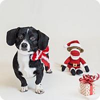 Adopt A Pet :: Bart - Naperville, IL