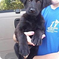 Adopt A Pet :: Colt - Berkeley Heights, NJ