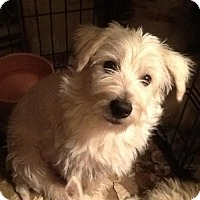 Adopt A Pet :: Jake - Rye, NH