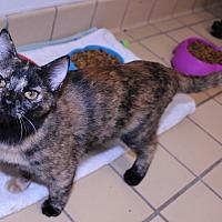 Adopt A Pet :: Chrissy - Lumberton, NC
