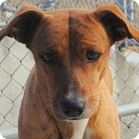 Adopt A Pet :: Molly - Anniston, AL